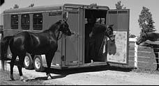 Horse and Stock Trailers